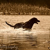 Monday, March 8, 2010<br /> <br /> Here is another photo taken by Gabe yesterday that I really liked. Looked like a classic shot of dog in the water.