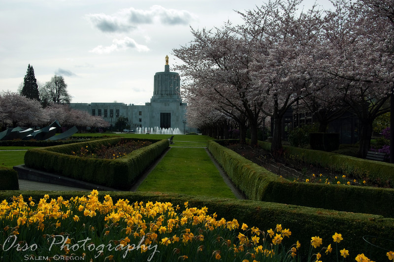 Tuesday, March 9, 2010<br /> <br /> I was driving by the State Capitol building today and noticed that the trees are blooming; so, I had to stop and try to capture it. I would've liked more if the sky was blue, but that's not very common in Oregon :D Hopefully I will be able to stop by once again when the weather is a little nicer before the flowers start to disappear.