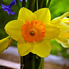 Sunday, March 20, 2011<br /> <br /> We were making some birthday cards today with flowers on them and Gabe took this photo from one of the flowers on our front yard. I did the post production, and it turned out great printed.