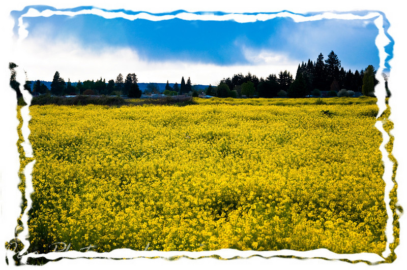Tuesday, April 28, 2009.<br /> <br /> Gabe and I were driving around the other day and we saw this field near our house that looked cool to me. I was able to get out of the car and snap a couple of pictures before it started to rain. I wish the clouds looked nicer of the sky looked blue, but again, I live in Oregon :D