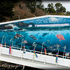 Saturday, March 28, 2009.<br /> <br /> I think I am done going through with all the pictures Gabe and I took this week while at the Oregon Coast. I am posting one of Gabe's picture (that he took) of this cool looking mural we saw. I hope it's OK to post someone else's art here, but we liked it a lot 'not to post'.