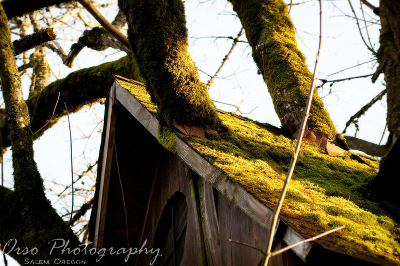 February 28, 2010<br /> <br /> Gabe and I had a photo shoot today and we came across this tree house in Monmouth, Oregon. It was on a field and it seemed abandoned and forgotten. I liked how the tree branches broke through the roof as they grew and the moss took over everything... It made me imagine how many kids have played here before from time to time.