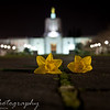 Thursday, March 19, 2009.<br /> <br /> Gabe, Eli, and I went to take some night pictures of the Oregon State Capitol building on Tuesday night. This was the first time Eli joined Gabe and I and he is the one who took this picture. Gabe came up with the composition idea, and he even took a few shots with his camera, which turned out pretty good too. Then Eli added another flower and captured this one, which I like a lot. I am posting Eli's picture since he hasn't had one of his pictures posted for a while. I think he did a great job!