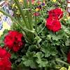 Great Plants @ Costco! -- 05/10/14