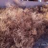Tumbleweeds! Ugh! - 02/24/14