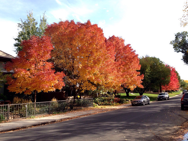 Garfield St, Denver, CO -- 10/18/14