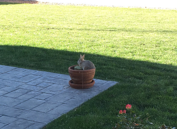 I Planted a Bunny -- 11/06/14