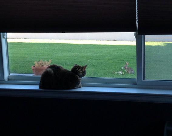 Hi Bunny -- 07/10/14