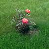 Full Bloom -- 06/03/14