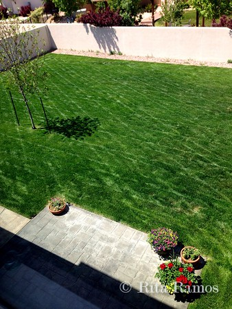 The Yard Was Done Beautifully -- 05/15/14