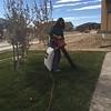 Leaf Clean-Up -- 12/13/14