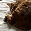 Sleep So Good It Curls Your Toes -- 03/17/15