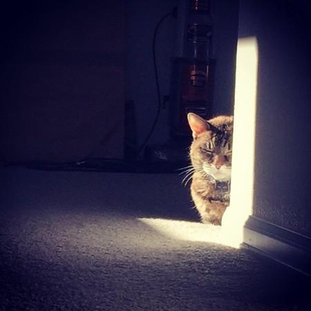 Sunning Feels Good on Old Bones -- 01/15/15