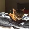Basking In The Morning Sun -- 02/12/16