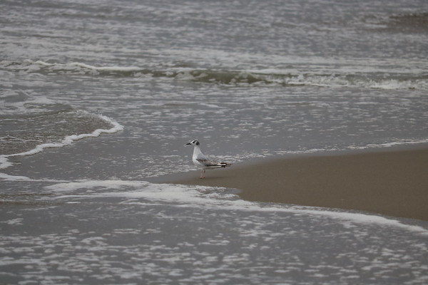 Wading and Waiting -- 05/24/17