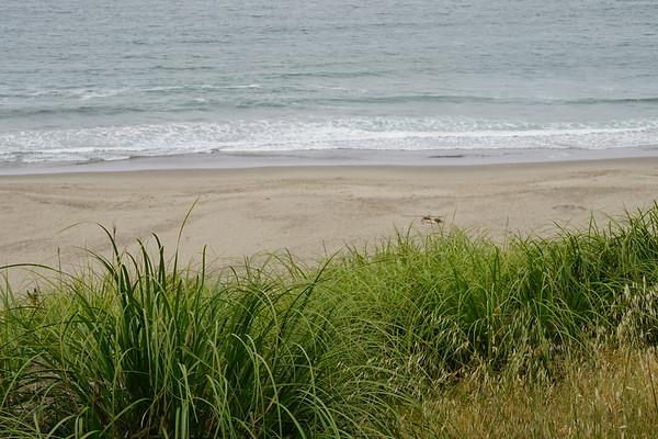 Beach Grasses -- 05/23/17