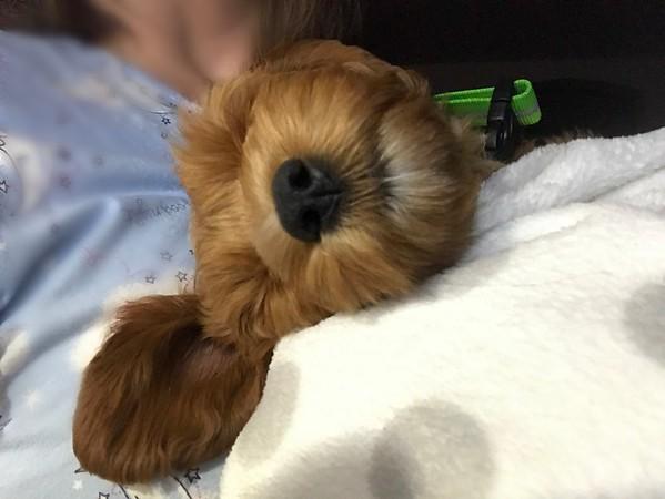 Hard Day of Puppyhood -- 06/25/17