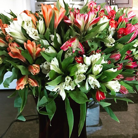 Peruvian Lilies -- 03/06/17