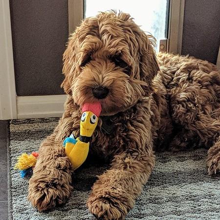 Kiss Me Ducky -- 11/05/17