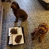 OMG Dog Room Service For Realz -- 04/15/18