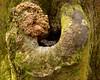 031116 Kanapaha Gardens Lizard