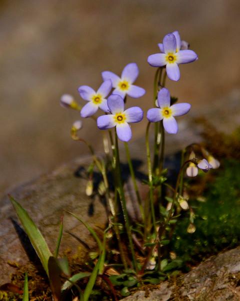 041216 Gunpowder River Hillside Wildflowers