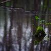 spring colors in Ebenezer Swamp