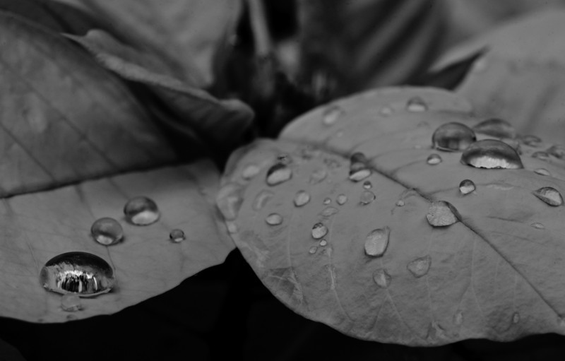 droplets on the surface of leaves