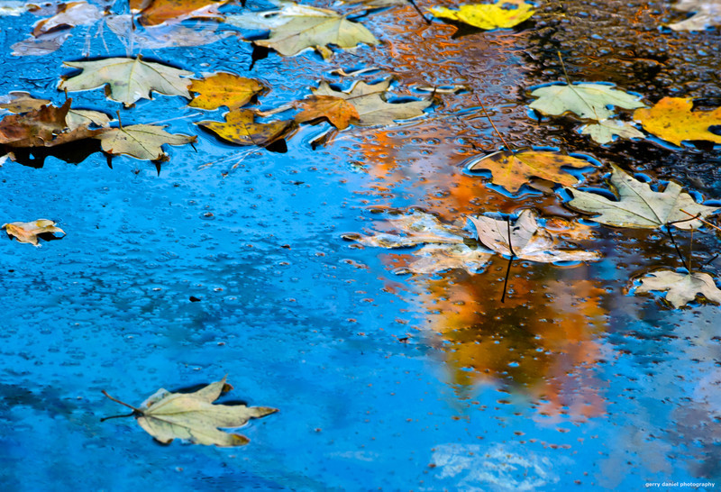 sky, leaves, water, autumn another way