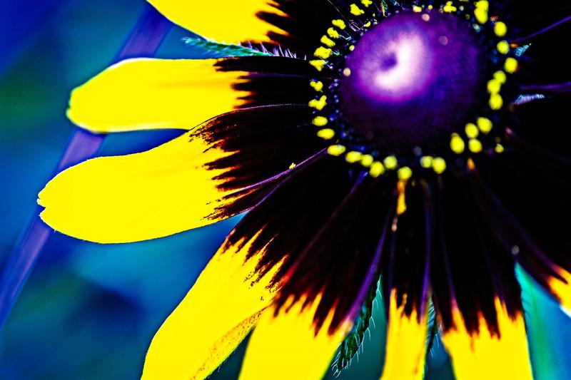 flower beauty radiating