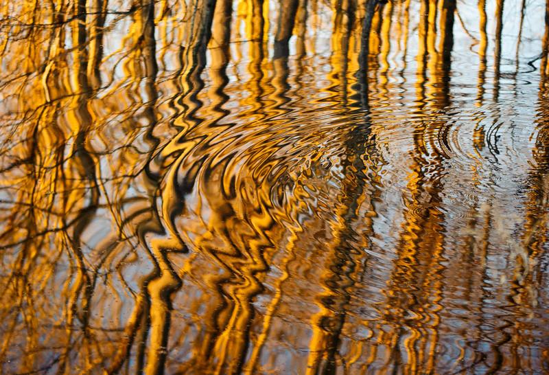 swamp ripples radiating