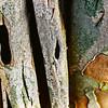 tree bark, natural camo