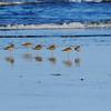 Shoreline birds