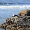 Bird watcher