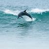 Worlds best Surfer?