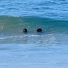 Seal's eye view