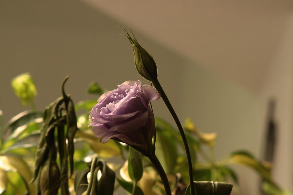 Feb. 11: Flower