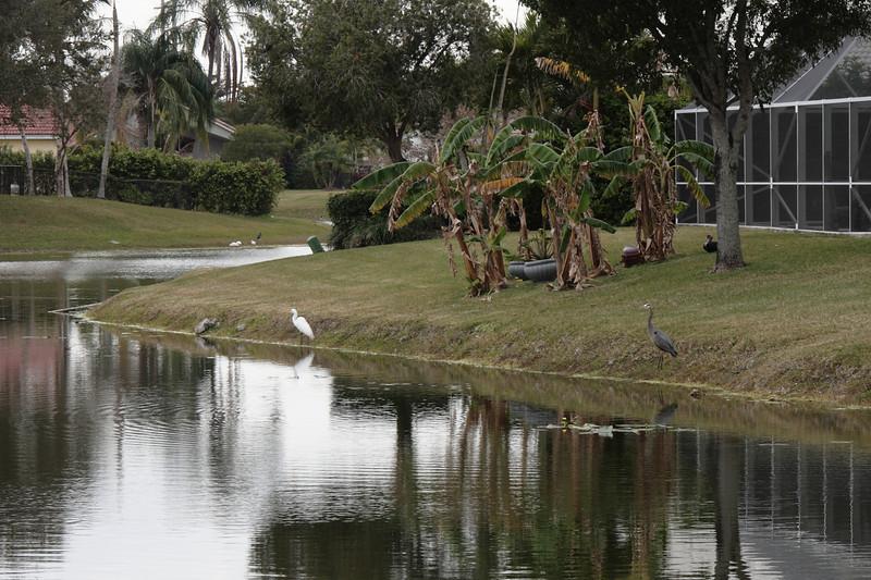 Mar. 9, 2010: Backyard Birds.