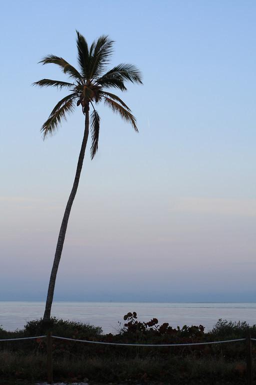 Jan. 20: Hello, Palm Tree!