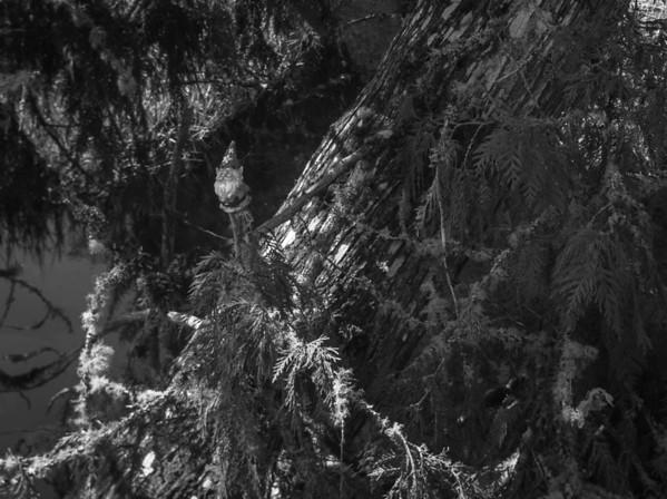 2014-04-14-Evans-Creek-Preserve