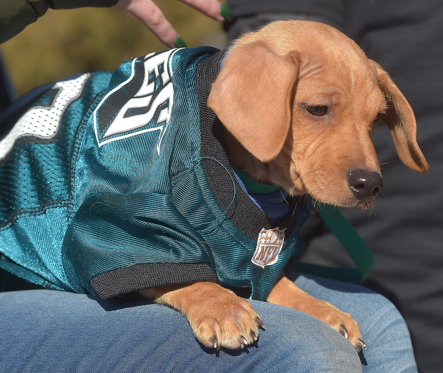 . PETE BANNAN-DIGITAL FIRST MEDIA      Justin Timerlake is available is available for adoption from Providence Animal Center as part of their Puppy Bowl  Justin took part in the Media Eagles parade.