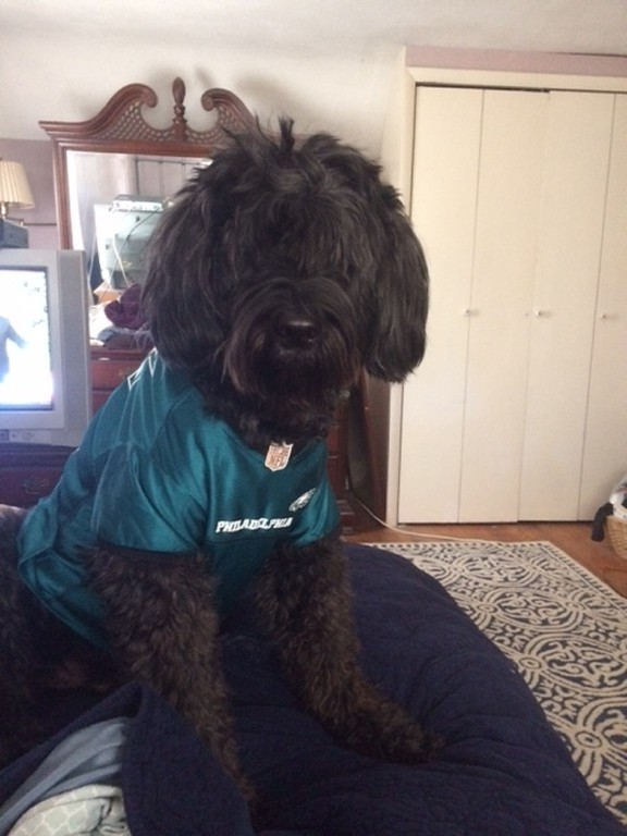 . Ralphie my 11 year old Portuguese Water Dog loves the Eagles!!!   My name is Karen and we are from Hamilton NJ