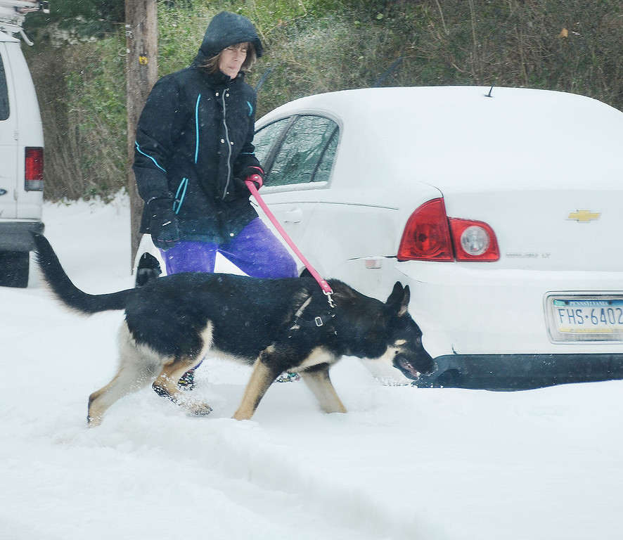 ". Theresa Hartman was out walking her German Shepard "" Jax \"" along N Adams St. in Pottstown....Photo/Tom Kelly III"
