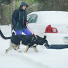 "Theresa Hartman was out walking her German Shepard "" Jax "" along N Adams St. in Pottstown....Photo/Tom Kelly III"