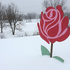 PETE  BANNAN-DIGITAL FIRST MEDIA      Tuesday's storm was two petals deep, at least at Whiteford Flowers in Exton..