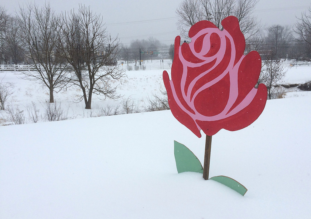 . PETE  BANNAN-DIGITAL FIRST MEDIA      Tuesday\'s storm was two petals deep, at least at Whiteford Flowers in Exton..