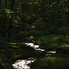 "(85) ""Hidden Brook"" 6/10/10<br /> Deep in the woods on a long afternoon hike and came across this small brook.  Was mostly cloudy but the sun came out as I got here and lit up the water; was so peaceful.  Had a nice quiet moment here :)<br /> Hope everyone has a wonderful Thursday!"