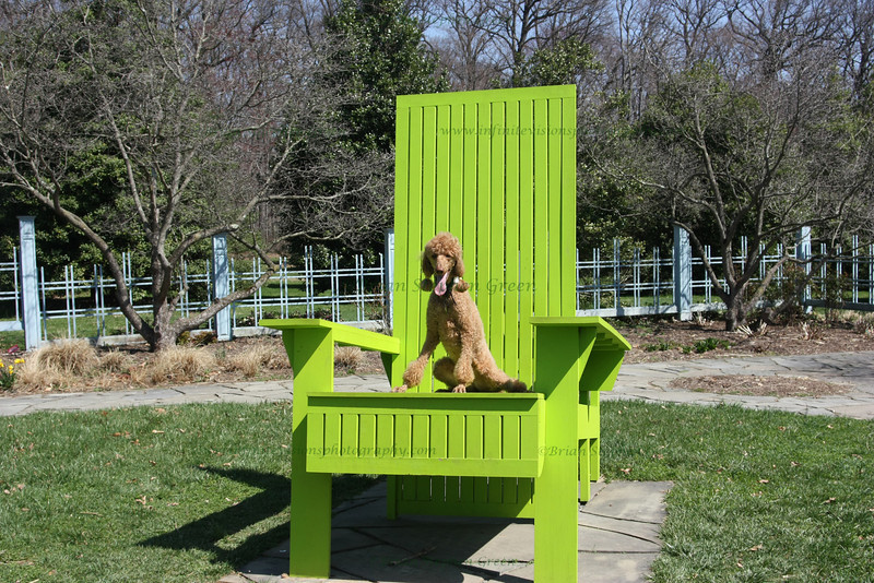 "(45) ""Annie in the Big Chair"" 5/1/10 A <B>very</B> popular photo spot within the Rutgers University Gardens.  There are 2 chairs like this, this one about 8 feet tall in the back and about 4 feet deep.  Just had to put Annie in the chair - she loves to pose :) Thank you all for the generous comments on my bee capture.  Following a hovering wood bee around for 20 minutes with a 300mm tele-macro on manual focus is a lot of fun - I recommend the experience to all *grin* Very busy weekend - will have to catch up on comments later tonight.  My wife has her production of Disney's ""Cinderella Kids"" this weekend which went missing a crew member, so I got drafted to work lights (old college pastime which I revive if one of her productions needs it).  Hoping to sneak a few captures of the kids in action sometime between light cues.  They are all so cute (1st to 6th grade).   Friday night's performance was a lot of fun and they all did a wonderful job. Hope everyone is having a great weekend and Happy May!"