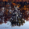 "(228) ""Fall Reflections"" 10/30/10"