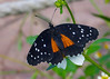 October 17, 2013 South Texas Butterfly